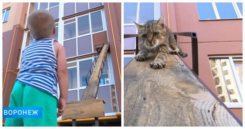 Отдельный вход для кота в многоэтажку
