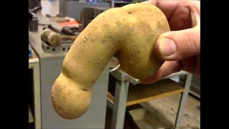 Картошечки не желаете?