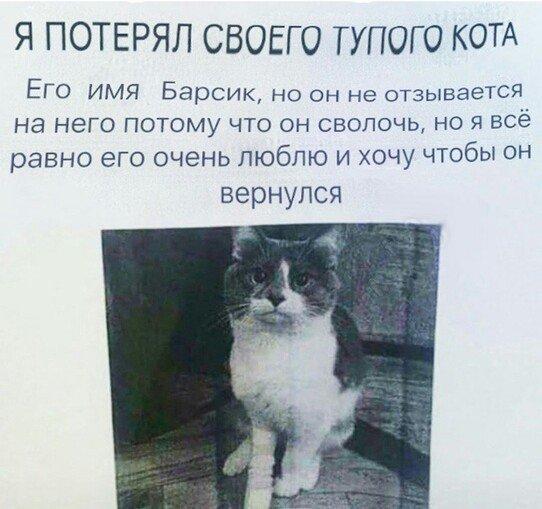 Глупый кот хуже воровства...