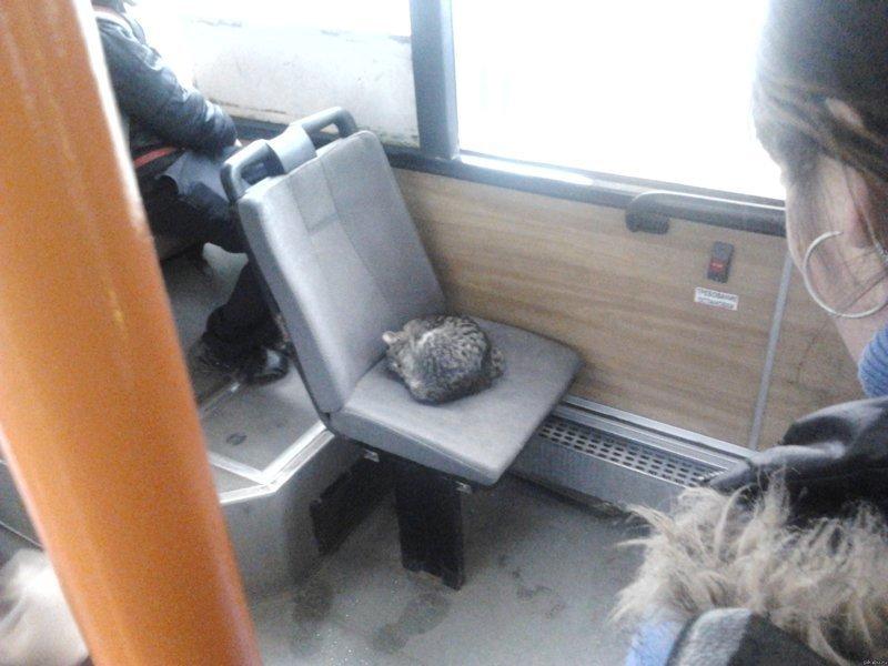 Места для котов