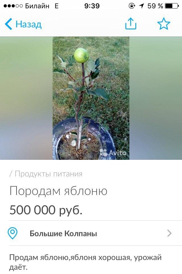 Урожайное деревце