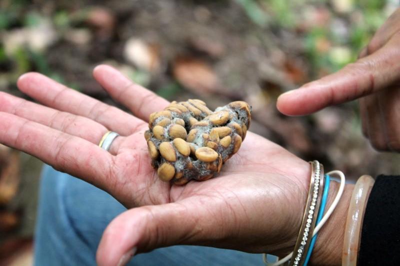Малый бизнес: Житель Электростали устроил у себя в животе завод по выпуску элитного кофе