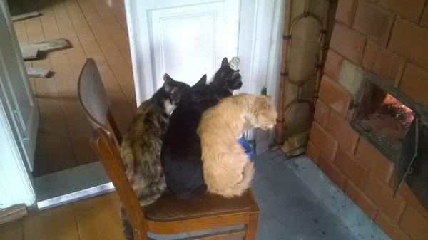 Спросить совета у котов...