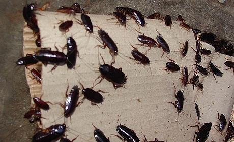 Но самое страшное в Ростове, Краснодаре и Казани - на города напали гигантские тараканы черного цвета