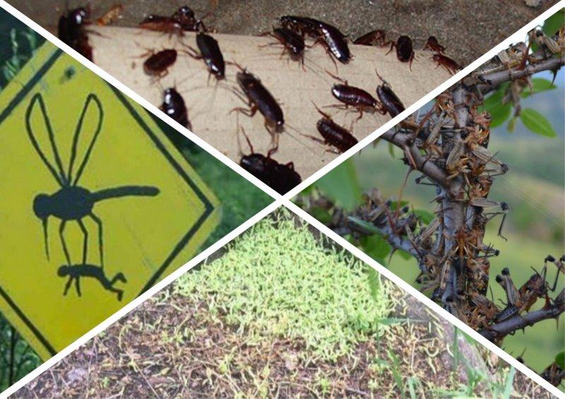 Лето-2018: мошки, тараканы, гусеницы и другие аномальные нашествия