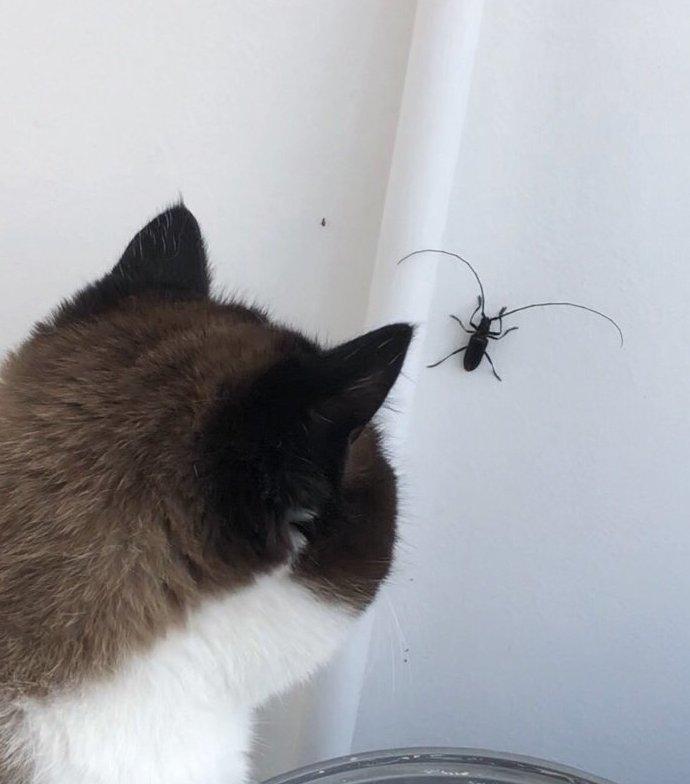 В Красноярске на жилье нападают усатые жуки, кошки в шоке