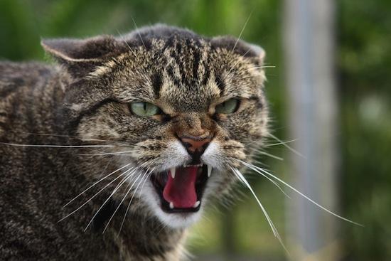 Тольяттинцев обложили «данью» за собак и кошек Тольятти, запрет, кошки, собаки