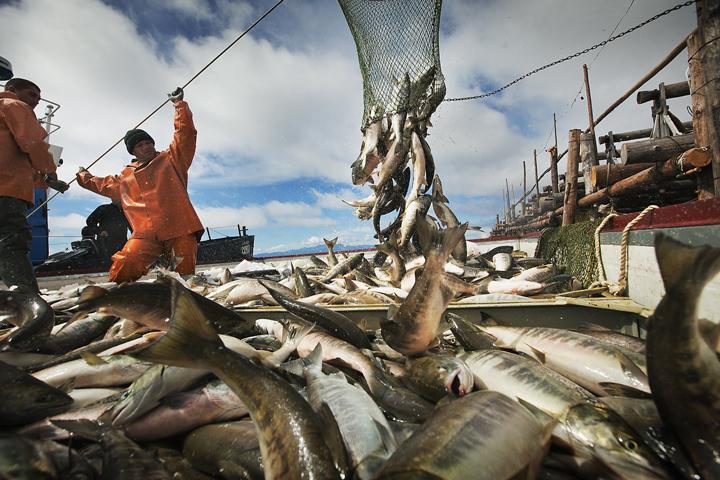 Налетай: В России упали цены на красную рыбу