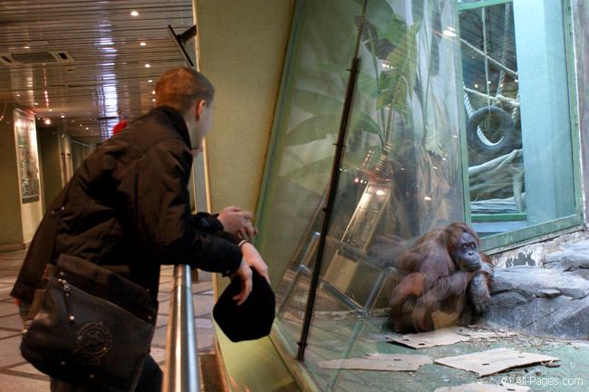 Московский зоопарк с 1 сентября уходит на зимовку