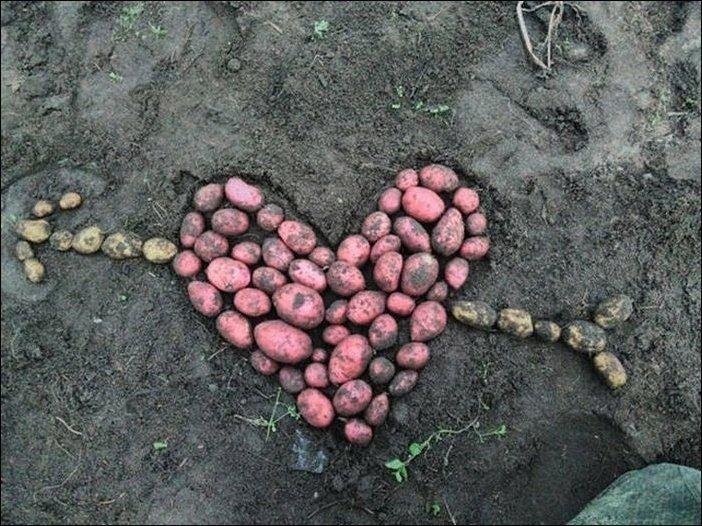Эх, картошечки накопал! Творческая жилка сразу проснулась!