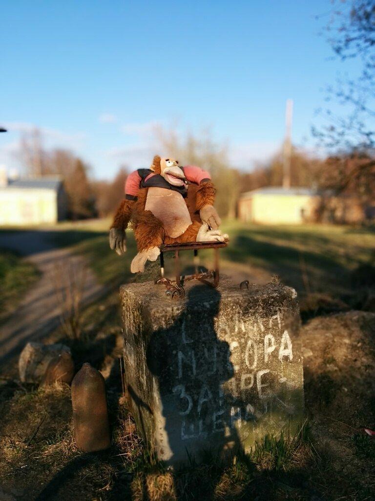 В Ленинградской области некоторые выброшенные игрушки устраиваются на работу.