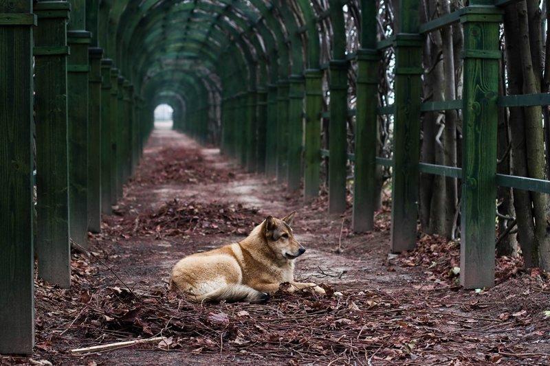 Но потянуло на родину, вернулся. Тут у нас в Архангельском хорошо... тишина, лес...