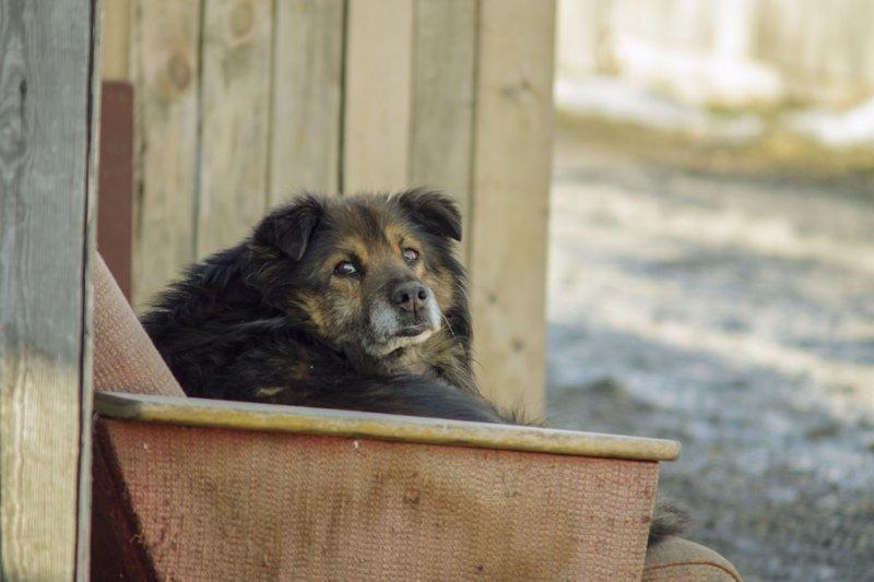 Жил-был пес, или внутренний диалог собаки