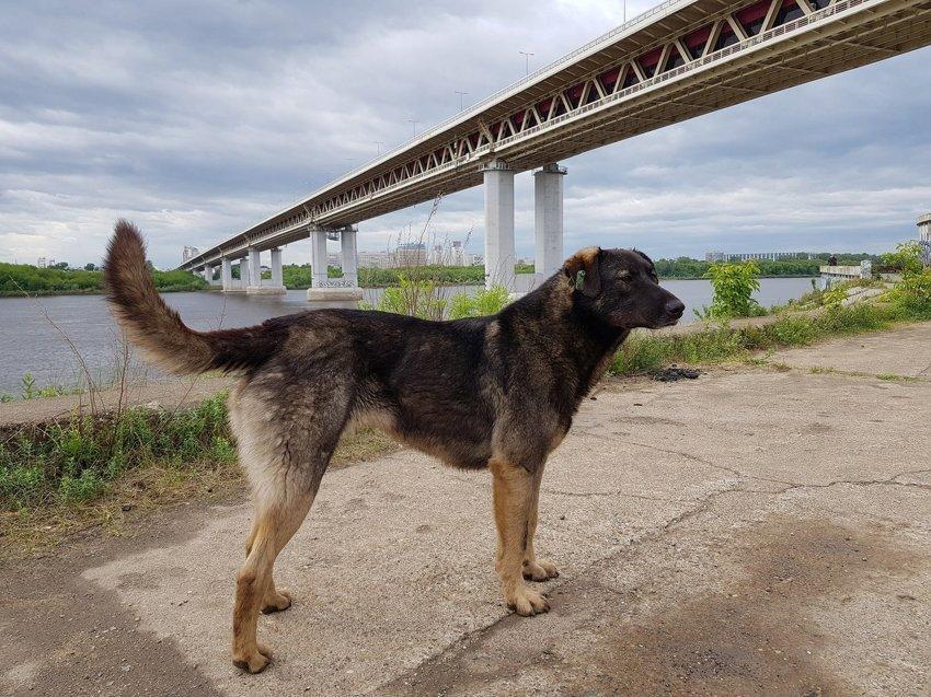 Итак, давайте знакомиться. Родился я и вырос под мостом в Нижнем Новгороде