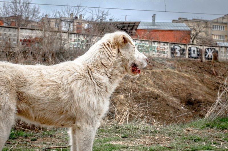 Однажды я съездил в Кисловодск. Честно скажу, здоровый образ жизни не для меня. Всегда хочу мяса...