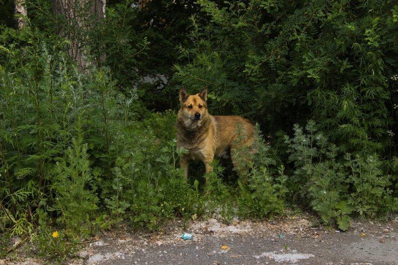 А это мой брат, он уехал в Магнитогорск, стал охотником