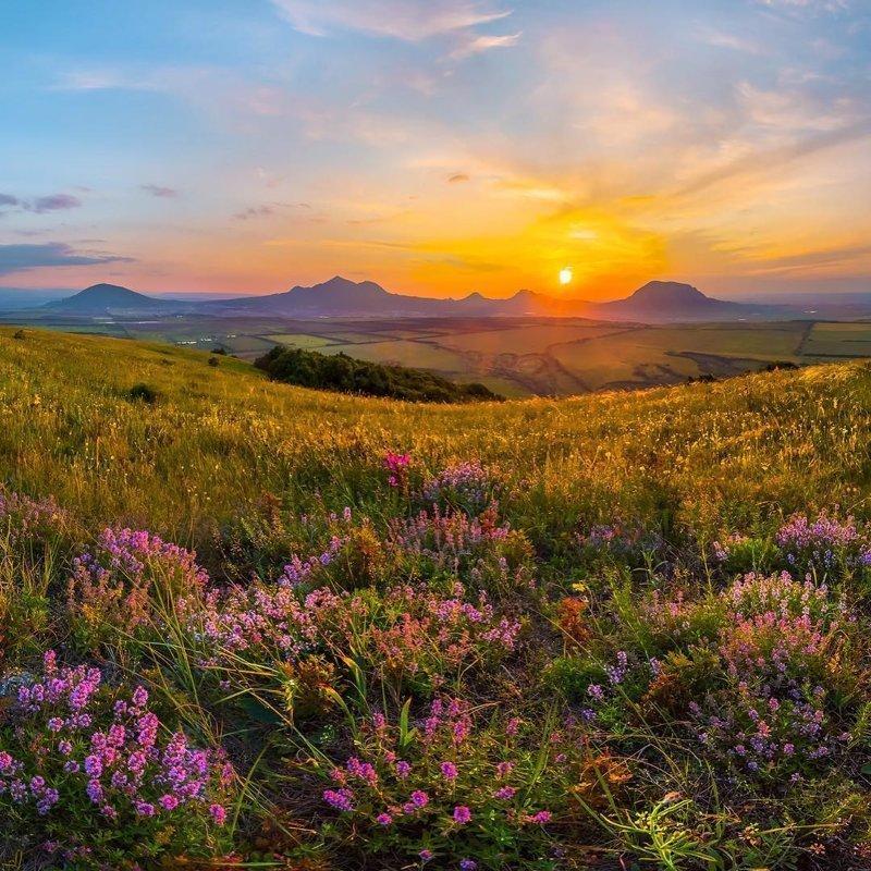 Так цветет степь в Кавказских минеральных водах