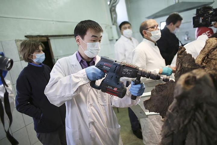 Россия и Южная Корея создают центр клонирования мамонтов