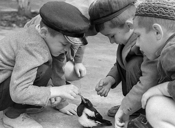 Дети нашли птенца сороки, 1965 год