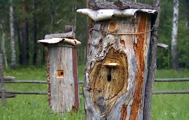 4. Покорители пчелиного дупла - бортники