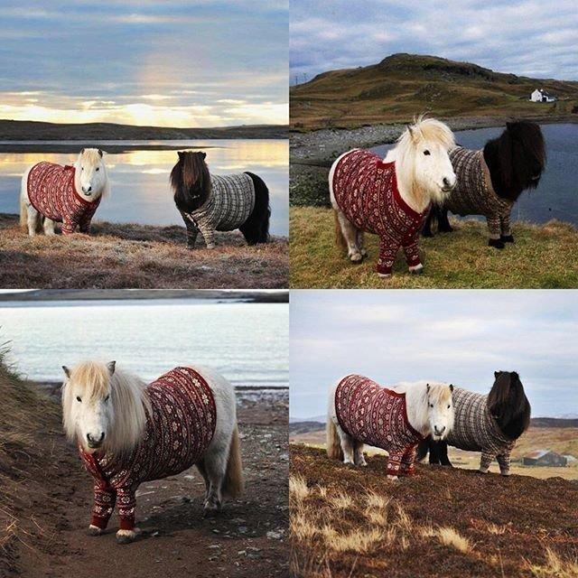 Наши шкафы ломятся от свитеров, пуловеров и жакеток