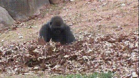 в листьях можно с удовольствием копаться и играть...