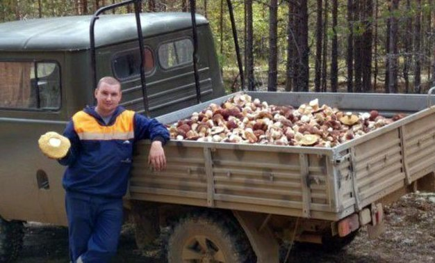 Конечно, осень - это грибы, огромные грибы, очень много грибов...