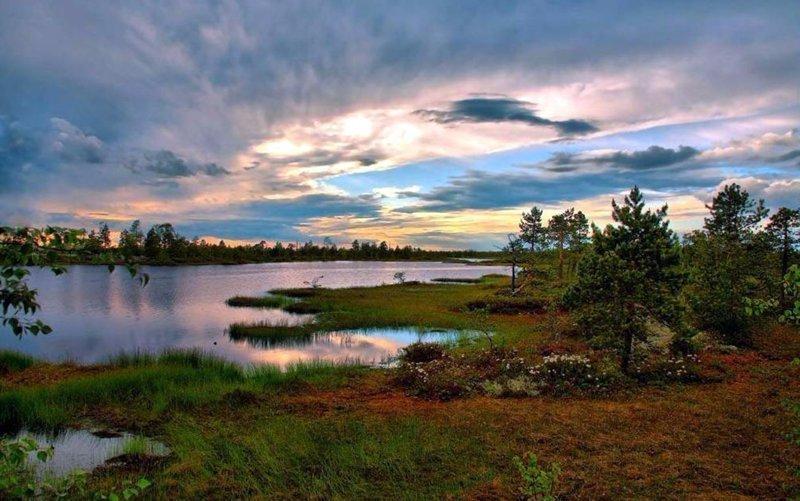 Расположенные в Западной Сибири Васюганские болота, одни из самых больших болот в мире