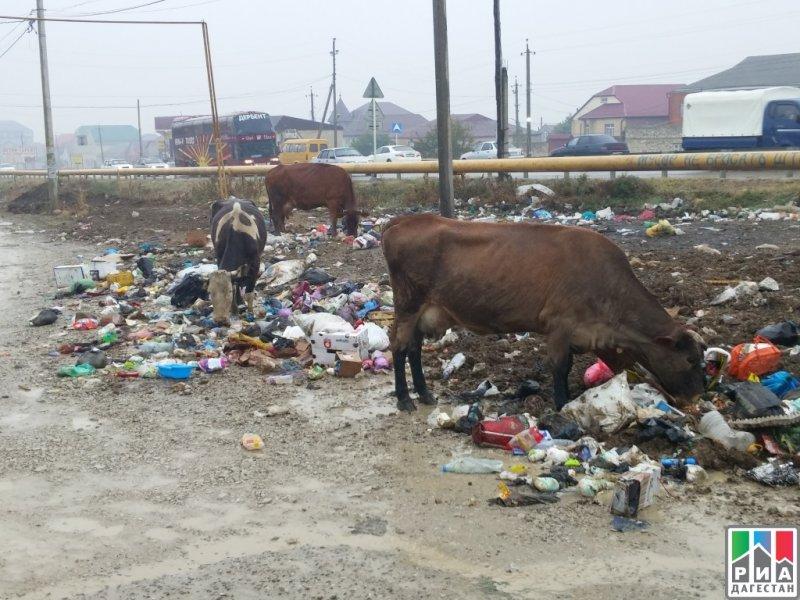 Иногда мусор перерабатывают вот таким вот необычным способом
