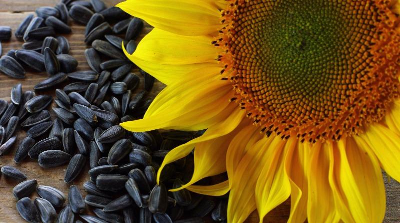 Семки будешь? 5 удивительных фактов о семечках в России