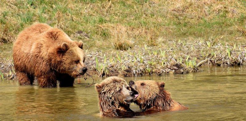 Медведи получили место в российском кинопрокате