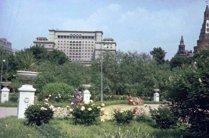 Александровский сад. Пальмы?