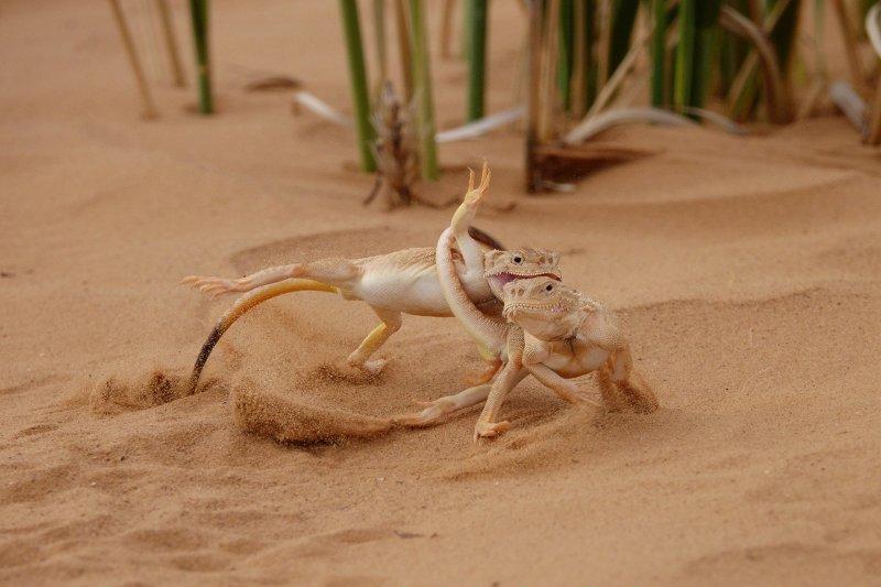Автор фото: Виктор Тяхт National Geographic, животные, природа, природа россии, фотографии