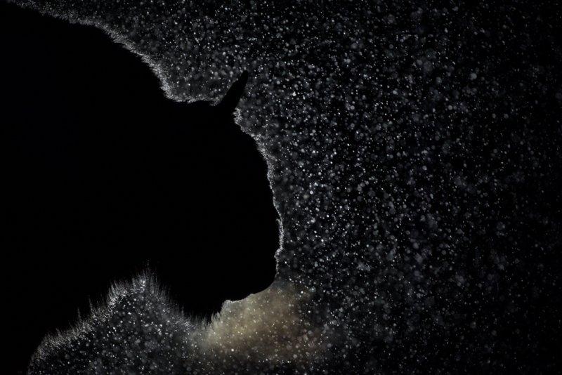 «Ночной гость». Автор фото: Игорь Зубков National Geographic, животные, природа, природа россии, фотографии