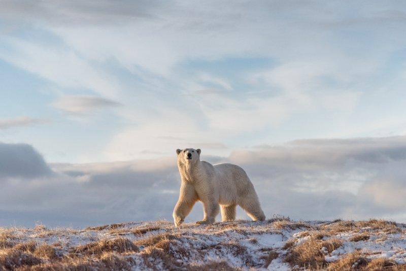 «Прогулка». Автор фото: Виталий Дворяченко National Geographic, животные, природа, природа россии, фотографии