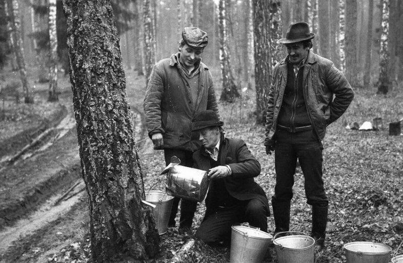 Мужчины собирают березовый сок в лесу, 1986 год