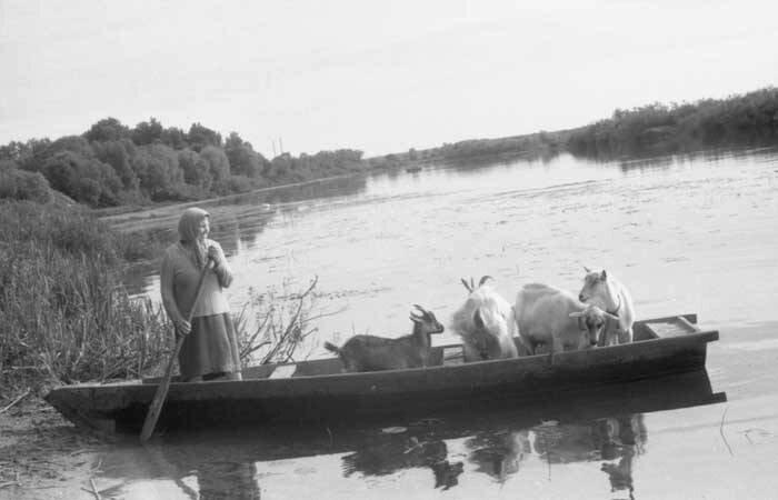 Каждый день летом сельчанка на лодке переправляла своих коз на другой берег реки Сож, чтобы животные вдоволь насытились свежей травы