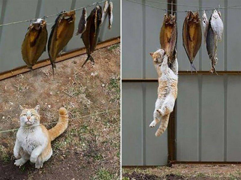 Перед вами настоящий добытчик Россия, коты, настроение, прикол