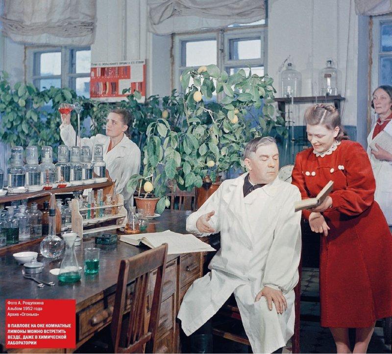 Комнатные лимоны в химической лаборатории, город Павлов на Оке, 1952 год история, кинохроника, ссср, страна, цвет