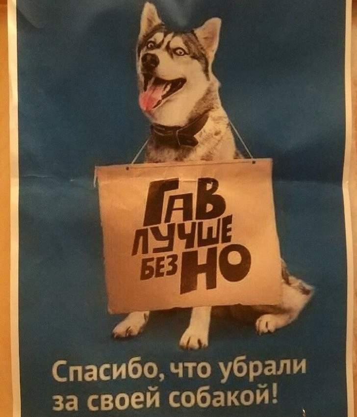 Милый песик Россия, забавно, объявления, подборка, умора, юмор