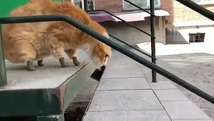 Бездомный кот отморозил лапы, но благодаря протезам снова может ходить