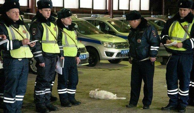 Кот тоже хочет стать лежачим полицейским