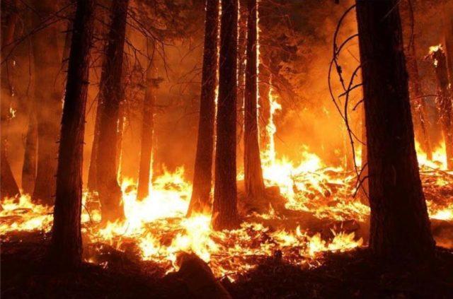Трамп предложил Владимиру Путину помощь в тушении лесных пожаров