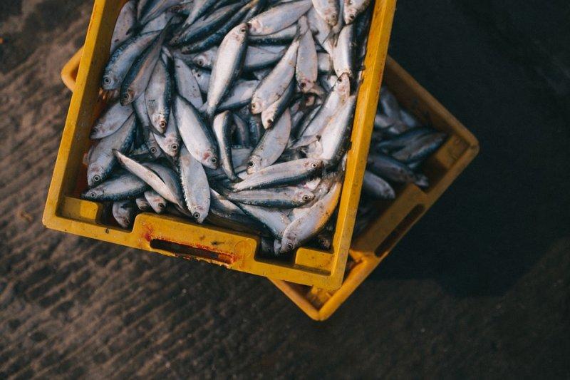 В России будут действовать новые правила любительской рыбалки