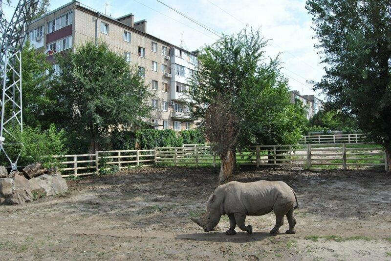 Кто сказал, что по улицам России ходят одни медведи?