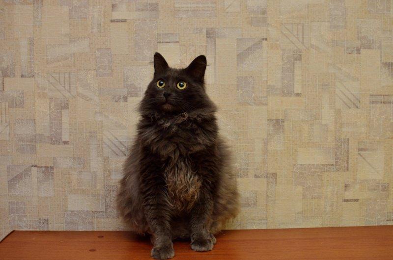 """В России подписывают петицию против """"дискриминации"""" животных по весу"""