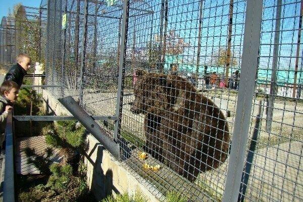 В крымском сафари-парке пытаются спасти медведей от расстрела