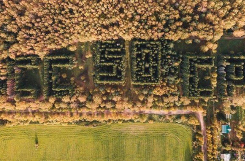 От СССР с любовью: символическое послание из деревьев
