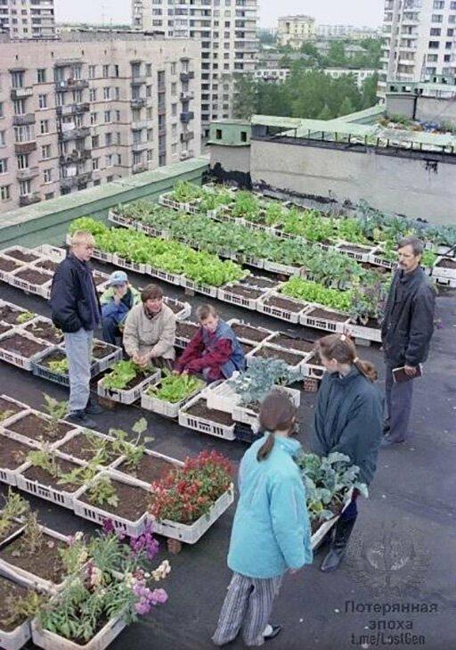 Саженцы на крыше дома в Санкт-Петербурге