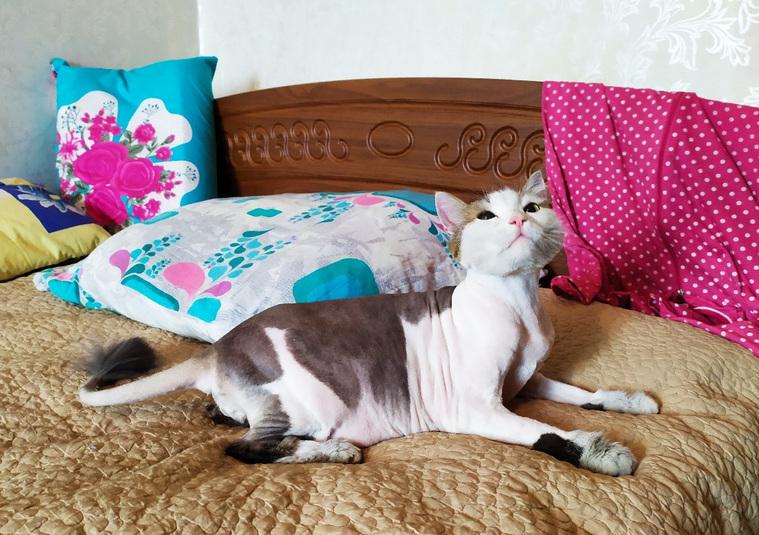 В Челябинске кот Леша спас хозяйку во время пожара